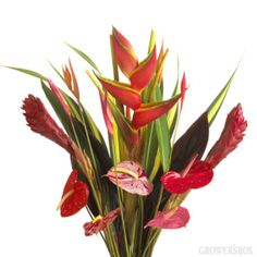 Thinking of flowers for your beach wedding? Looking for fun colors, hardy flowers and unforgettable arrangements? Go Tropical! The Grower's Box offers an excellent assortment of fresh cut tropical flowers from Hawaii! Check us out online at: www.growersbox.com!
