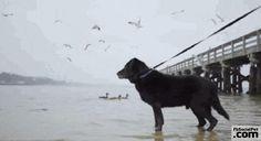 Bear, legato alla catena per 15 anni, viene finalmente liberato | FbSocialPet.com Dopo tanto tempo Bear riesce a vedere il mare e a camminare sul bagnasciuga.. #Iloveanimals #Ilovepets #dogs #animalisalvati #iostoconfbsocialpet #FbSocialPet Rimani aggiornato su FbSocialPet.com