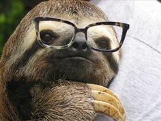 Pret Loves: Sloths in Stella McCartney Glasses