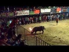 """¿Es humano amarrar a un toro a un pilar mediante una soga que lleva atada, y una vez inmovilizado, prender fuego a unas """"bolas"""" impregnadas de material inflamable que lleva sujeto a su cuerpo? Es lo que se llama """"toro embolado"""" o """"Bou embolat"""", además , subvencionado con dinero de todos.   Todos los años, en nuestra localidad se celebran las fiestas patronales con una de sus tradiciones más crueles; el Toro Embolado o Toro de Fuego, que consiste en amarrar al animal a un pilón mediante una…"""