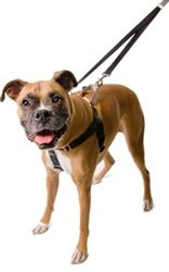 http://www.twopuffersandanekkie.com/ProductDetails.asp?ProductCode=freedom-no-pull-harness