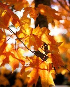 fall in Oregon & Washington