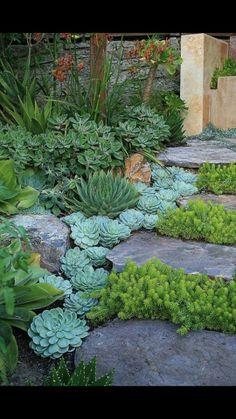 Love this idea using succulents