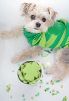St Patricks Day Greenies type Fresh Breath dog treats recipe - Minnie in Manhattan