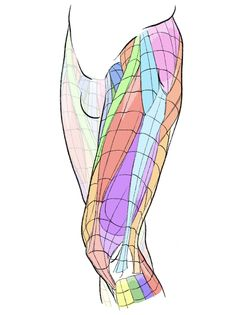 Leg Anatomy, Anatomy Poses, Anatomy Study, Anatomy Art, Body Reference, Anatomy Reference, Art Reference Poses, Human Anatomy For Artists, Human Anatomy Drawing