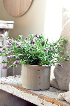 French cheese pot with lavender