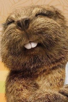 """beaver....as soon as I saw this photo I thought of the old Ipana toothpaste commercial which featured Bucky Beaver singing  ♫ """"Brusha, Brusha, Brusha..... Get the new Ipana,---Its dandy for your teeth!! ♫  ;-)"""