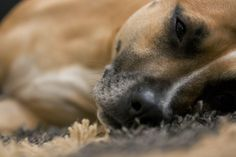 My Doggy Pip!