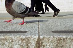 Matt Stuart  pigeon walk
