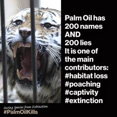#PalmOilKills Our Planet, Save The Planet, Save The Orangutans, Animal Protection, Environmental Issues, What You Can Do, Global Warming, Habitats, Earth