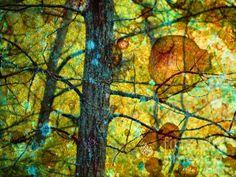 Amongst the Branches - Tara Turner