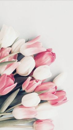 Ideas For Flowers Tulips Wallpaper - Vintage - Blumen Pink Tulips, Tulips Flowers, Pretty Flowers, Flowers Nature, Flowers Garden, Floral Flowers, Pink Roses, Paper Flowers, White Tulips