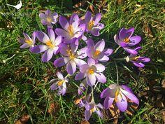 Spring arrives at Mount Juliet Estate. Visit our new website at www.mountjuliet.ie
