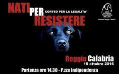 """A Reggio Calabria in marcia con LNDC per la legalità: è """"Nati per resistere"""" :http://www.qualazampa.news/event/a-reggio-calabria-in-marcia-con-lndc-per-la-legalita-e-nati-per-resistere/"""