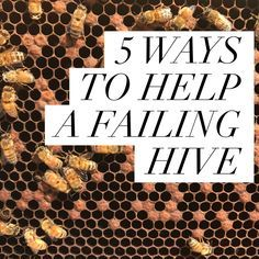 5 WAYS TO HELP A FAILING HIVE