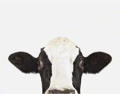 Cow No. 2