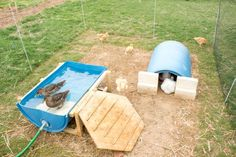 Blue plastic drums for swimming and sleeping Backyard Ducks, Backyard Poultry, Backyard Chicken Coops, Backyard Farming, Chickens Backyard, Raising Ducks, Raising Chickens, Canard Coop, Duck Pens