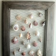 Shell display or maybe for displaying earrings...