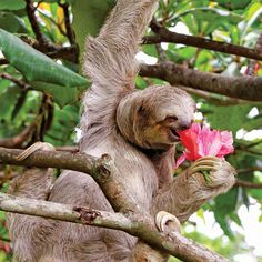 Lucy Cooke's 'Life in the Sloth Lane' embraces a slower, more mindful life.