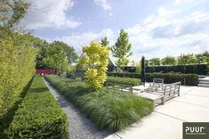 Strakke watertuin - PUUR groenprojecten Plant Design, Garden Design, Rooftop Pool, Garden Inspiration, Outdoor Gardens, Sidewalk, Landscape, Rooftops, Green Walls