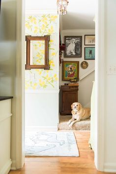 Amanda Louise Interiors Yellow Kitchen Photo by Luke Cleland Funky Lighting, Dog Spaces, Small Entryways, Entry Tables, Kitchen Photos, Pet Home, Home Decor Trends, Decor Ideas, Entryway Decor