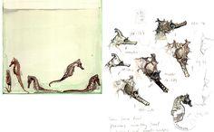 Seahorse Studies | Natural History Art & Illustration
