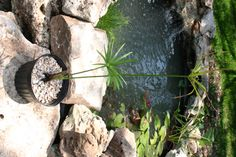 Build a pond from your crap hot tub.
