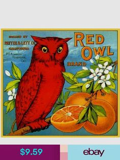 red owl on a vintage orange crate label Vintage Labels, Vintage Postcards, Vintage Ads, Funny Vintage, Vintage Branding, Vintage Signs, Vintage Images, Orange Crate Labels, Vegetable Crates