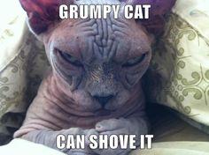 GRUMPY CAT CAN SHOVE IT