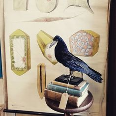A rook, books and an old school poster. The perfect combo.  #taxidermy #taxidermist #rook #crow #raven #oldbooks #antique #vintage #oldschool #interiordesign #curio #vintageshop #ChesterUK #Cheshire #cheshireantiques #becnickswonderemporium #deadstockcurios