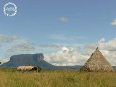 Canaima - Die typischen Tepuis Tafelberge #insidertips #venezuela