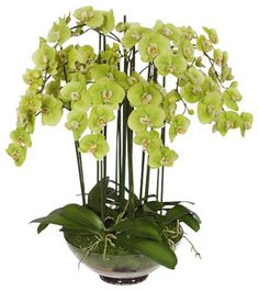 Phalaenopsis Orchid In Glass Vase 32'' - traditional - artificial flowers - by Winward Designs