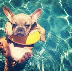 """""""Boxer Puppy* """"appears at *Ease, as Ears Perked Up"""" """"saying,""""  """"It is a *Ok for The soaking Up the *Sun,  *Cool Water!"""""""