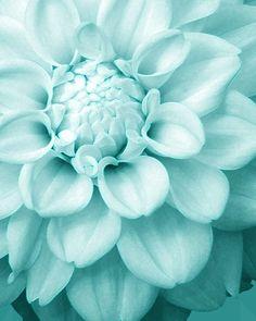 Aqua Flower. Chalky flat colour