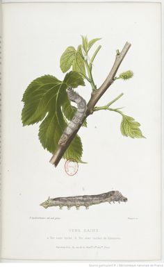 Études sur la maladie des vers à soie... / par M. L. Pasteur,...   Gallica