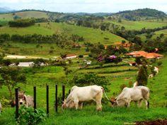Brasil - isto que é fazenda,o resto é bobagem…maravilhoso o lugar…