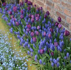 Precious Tips for Outdoor Gardens - Modern Shade Garden Plants, Tulips Garden, Garden Bulbs, Farm Gardens, Outdoor Gardens, Dream Garden, Garden Art, Beautiful Gardens, Beautiful Flowers