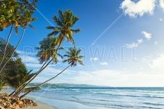 Palms and Beach, Trinidad and Tobago - Tapetit / tapetti - Photowall