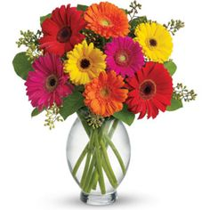 Gerbera Delight.  A colourful bouquet of hot pink and red gerberas, orange, hot pink and yellow mini gerberas and greenery delivered in a glass vase.