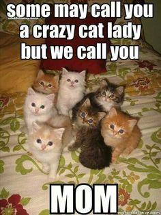 Crazy cat lady = MOM - Sooo cute!