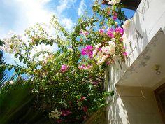6/14(水)バリ島ウブドのお天気は晴れ。室内温度27.9℃、湿度77%。念願の晴れ!!久しぶりの青空にこんにちは♪やっぱり晴れが良いね~☆