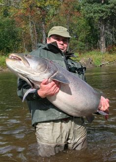 The taimen, found in freshwater rivers and lakes of Russia, Mongolia and Central Asia, is the largest species in the salmon family. Fishing Times, Gone Fishing, Fishing Boats, Fishing Stuff, Sturgeon Fish, Fish Snacks, Fish List, Monster Fishing, Fishing Photos
