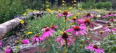 wildflower gardens | Friday means it's the weekend! And the weekend means getting outside ...