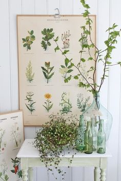 Vignette with botanical charts, green bottles and a plants by Vibeke Design