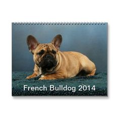 French Bulldog 2014 Calendar