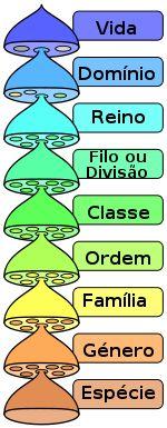 Domínio (biologia) – Wikipédia, a enciclopédia livre