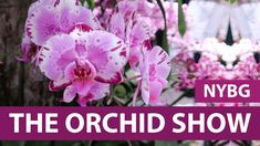 Orchid Show 2017 | New York City Botanical Gardens - YouTube