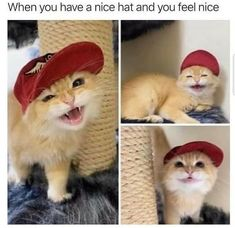 Saying Hooray To Another Purrfect Caturday - I Can Has Cheezburger? Cute Funny Animals, Cute Baby Animals, Funny Cats, Cute Kittens, Cats And Kittens, Crazy Cat Lady, Crazy Cats, Cat Memes, Funny Memes