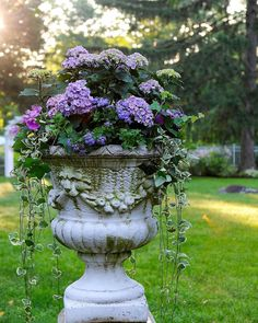 Container Gardening Ideas (HYDRANGEA IN STONE URN) Gardens At First Light (Container Garden Ideas - After publishing 15 Fascinating Vegetable Garden Ideas, I have discovered a whole bunch of garden tour. In these plant pots and container garden ideas. Amazing Gardens, Beautiful Gardens, Beautiful Flowers, Urn Planters, Outdoor Planters, Outdoor Gardens, Container Plants, Container Gardening, Hydrangea Potted