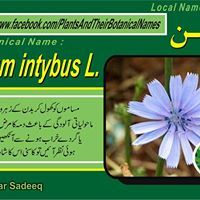 Plans Benefits In Urdu English Plant Benefits Botanical Herbs